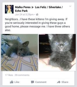 2015-06-25 Kittens